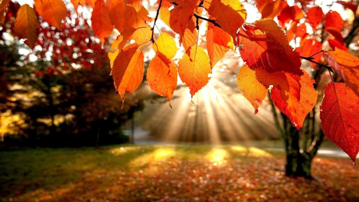 autunno-psicologia